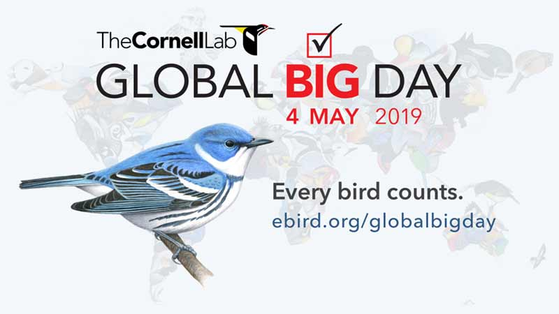 global-big-day-2019-birding-competition-peru