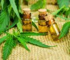 A draft bill regarding the use of medical marijuana was approved by the National Defense Commission of the Peruvian Congress; next step a plenary debate that could clear the way for the legal usage of cannabis oil in Peru