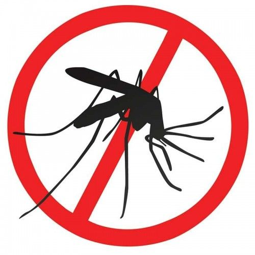 Dengue fever transmitting mosquitos found throughout Lima